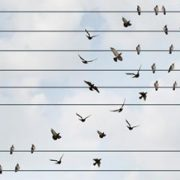 birds moving between lines as metaphor for change