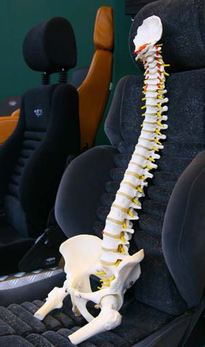 Human spine – back pain from driving
