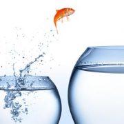 goldfish jumping into new bowl aka digital change