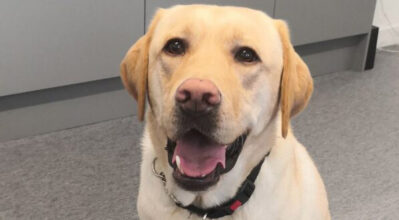 A guide dog called Winston, relaxing in System Concepts' office.